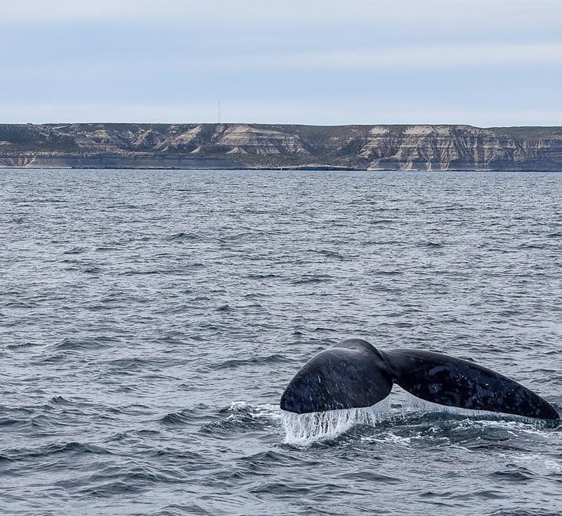 Avistaje de ballenas, una experiencia única